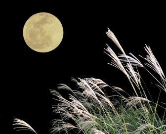 満月とすすき