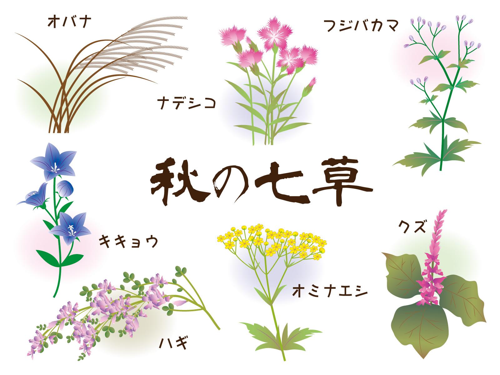 秋の七草を食べるのはいつ!?「秋の七草」の意味と種類 | 知恵ラボ