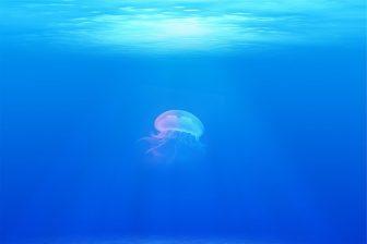 海の色違い5
