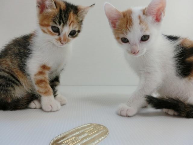 猫に小判-1