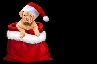 クリスマス-1