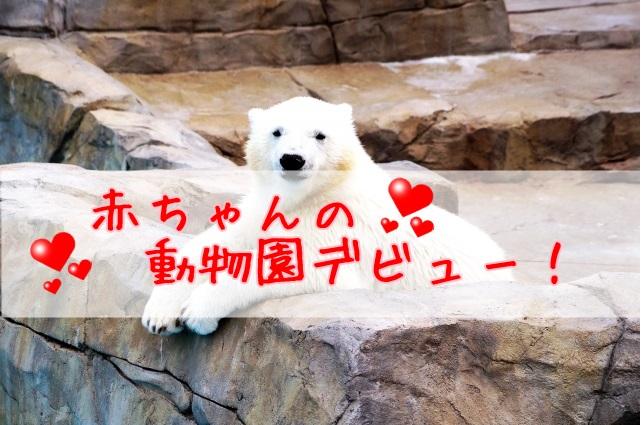 赤ちゃんの動物園デビュー1